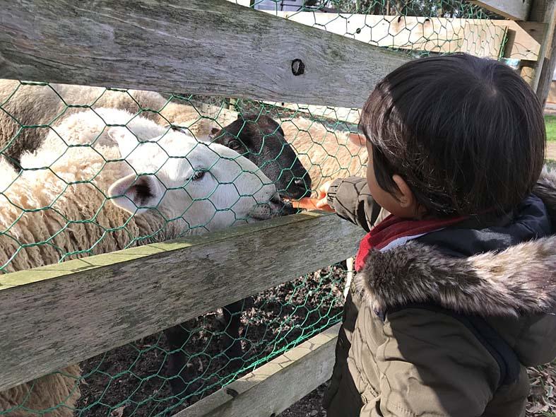 富山子供連れの遊び場動物園【富山市ファミリーパーク】無料エリア編