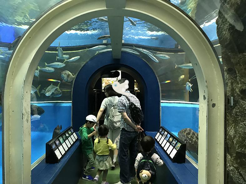 富山子供連れ屋内遊び場【魚津水族館】遊園地と一緒に行ける水族館!