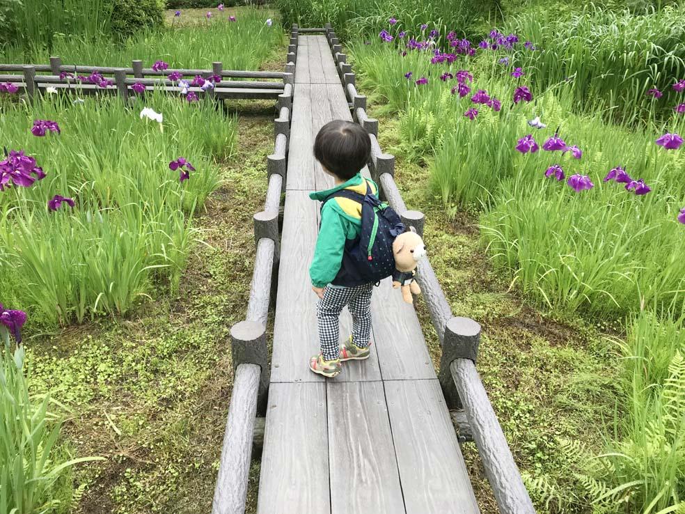 富山子供連れの遊び場【行田公園】心癒される花しょうぶ祭に行ってきた