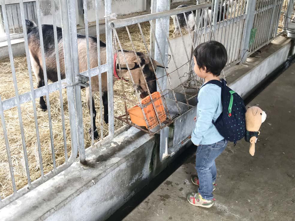 富山子供連れの遊び場【丘の夢牧場】ウシやヤギを間近で見学できる!