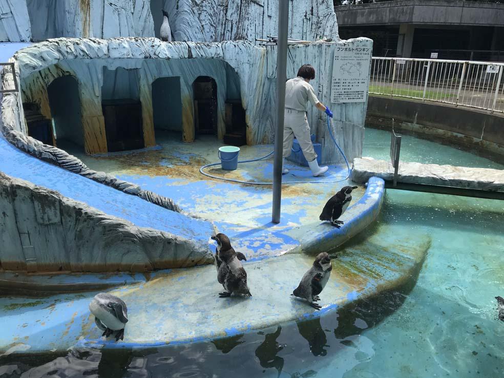 富山子供連れの遊び場【高岡古城公園】小さな動物園でのんびりタイム