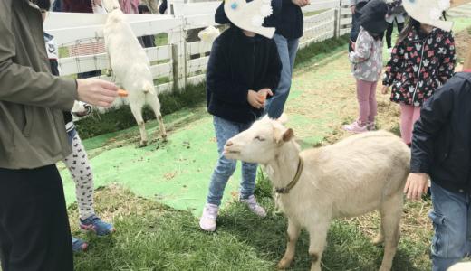 富山子供連れの遊び場【黒部牧場まきばの風】動物とのふれあい、ソフトクリームにチーズが楽しめるおすすめ観光牧場!