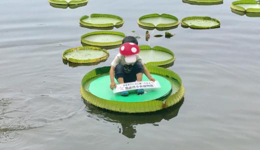 【富山県中央植物園】の夏休みイベント【オオオニバスに乗ってみよう!】に参加してきた体験談!子どもが乗っていいのは何キロまで!?