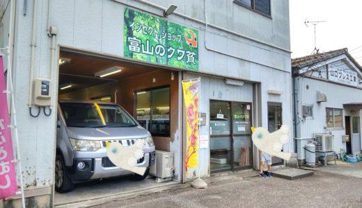 【富山のクワ貧】カブトムシ&クワガタ飼育の専門店に行ってきた体験談!【わが家のカブちゃん飼育の備忘録】